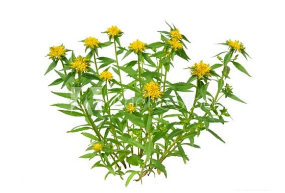 Rhodiola Rosea natural supplements for muscle building